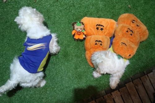 Halloweennofukugachijinjyattazo2.jpg