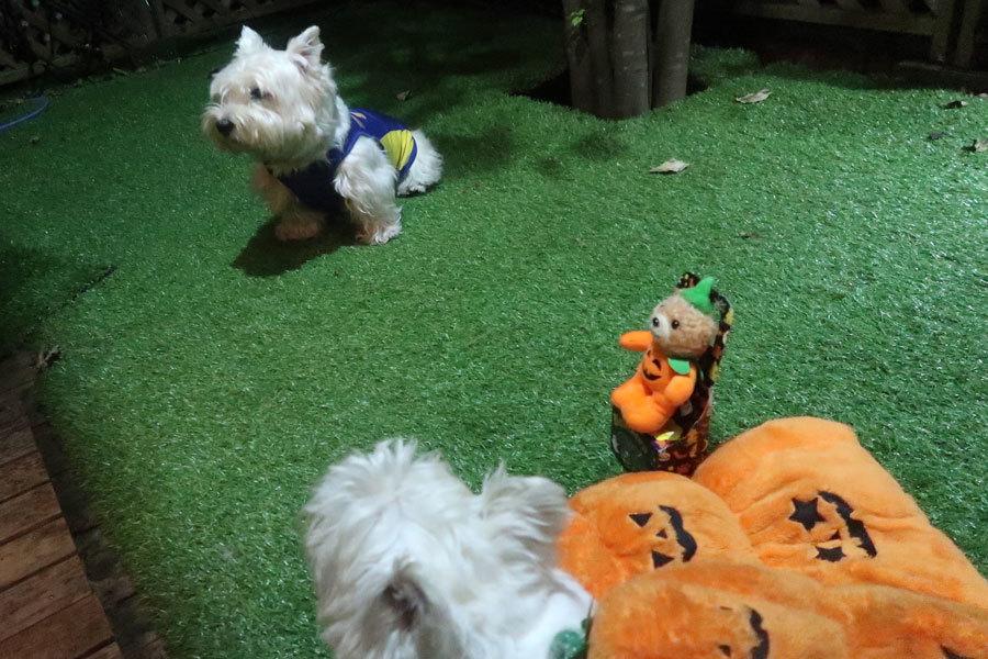Halloweennofukugachijinjyattazo3.jpg