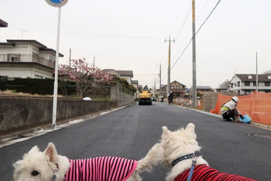 dourokoujidehigaigaippaidayo1.jpg