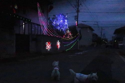 illuminationnokisetugamatayattekita1.jpg