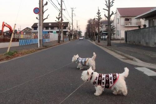 oyasumidakedohayaokikicyauame3.jpg