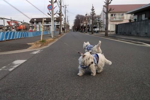 tanukigashuketusitekiteirunokamone4.jpg