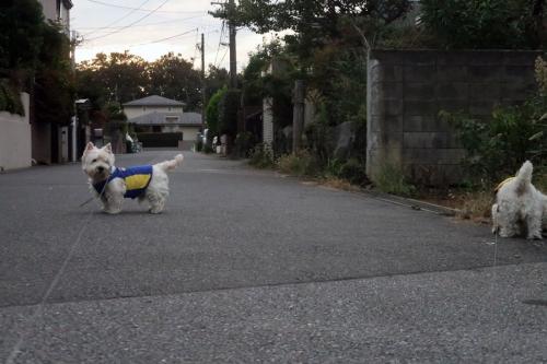 tokuhitusuruyonakotonanaiasa1.jpg
