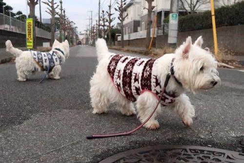 yononakayasumidakarattebokuchigau2.jpg