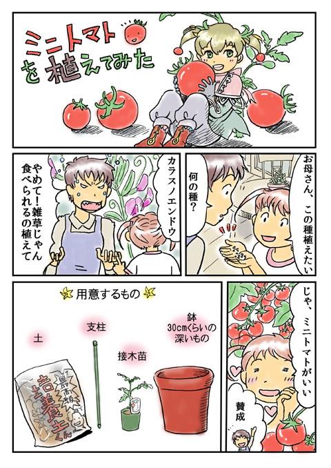 480トマト1