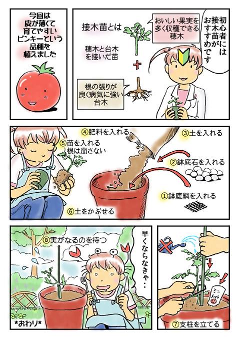 480トマト2