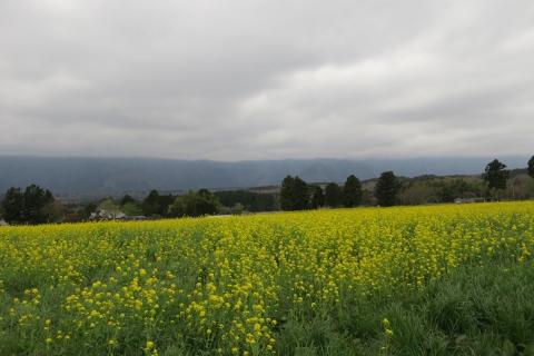 05b広大な菜の花畑