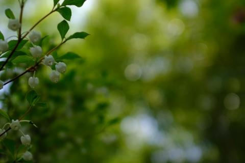 16佐野美術館白い花