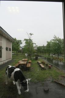 14本格的な雨