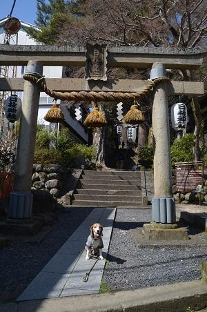 20180328修善寺日枝神社03