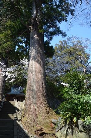 20180328修善寺日枝神社10