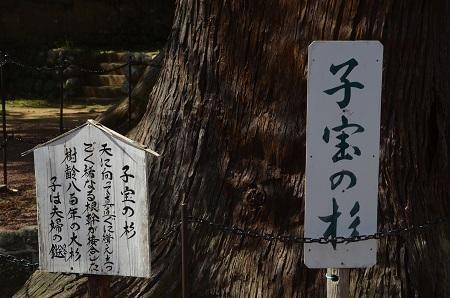 20180328修善寺日枝神社23
