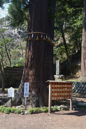 20180328修善寺日枝神社19