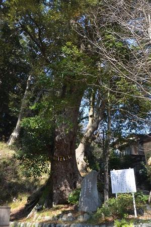 20180328修善寺日枝神社33
