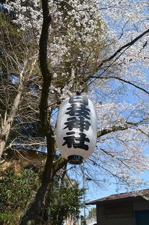 20180328修善寺日枝神社34