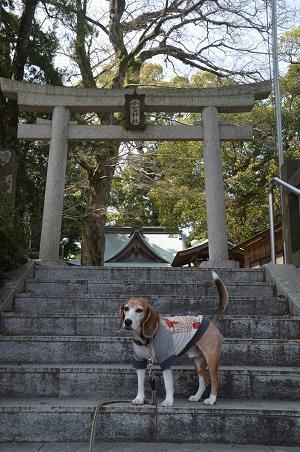 20180329今宮神社06