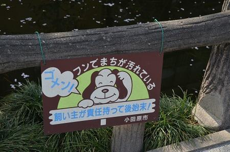 20180329松原神社03