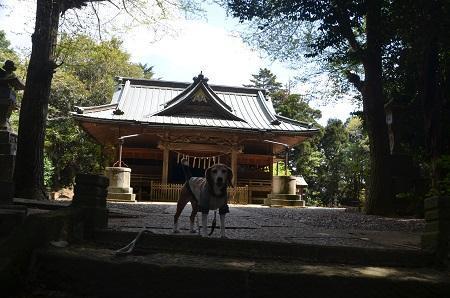 20180408府馬愛宕神社12