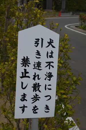 20180411白子神社06