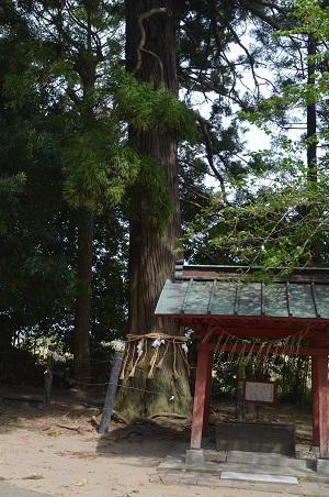 20180411住吉神社21