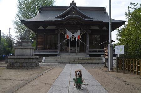 20180411八幡神社04