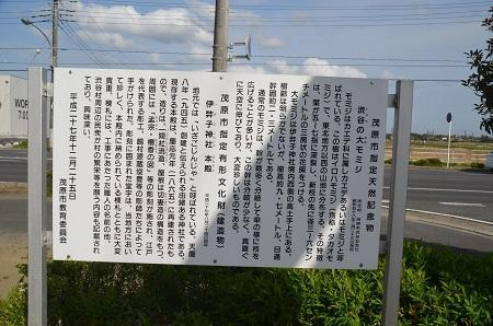 20180411伊弉子神社02