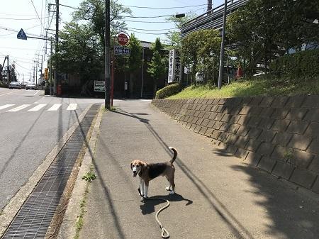 20180421狂犬病予防接種04