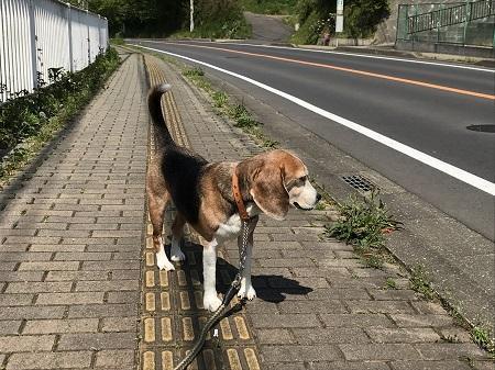 20180421狂犬病予防接種02