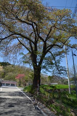 20180426旧・楢原小学校跡02