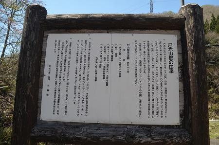 20180426戸赤の山桜04