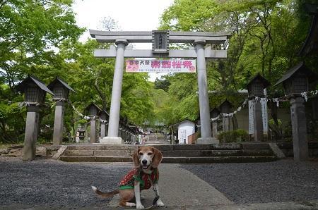 20180427南湖神社06
