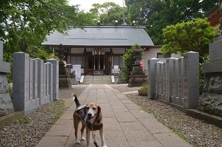20180518柴崎神社13