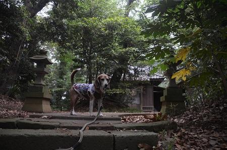 20180518浅間神社09