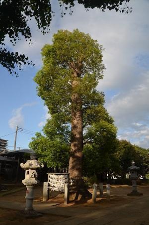 20180519大宮神社24