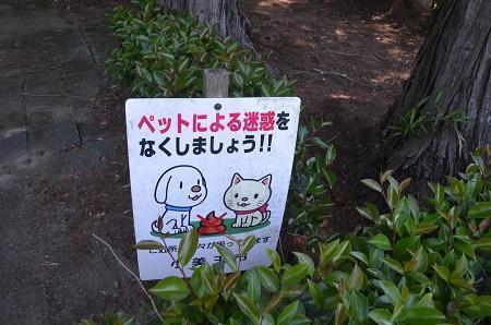 20180522羽木上森林公03