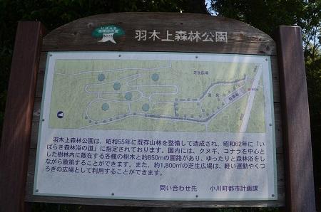 20180522羽木上森林公02