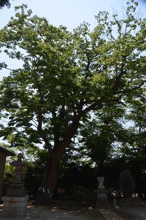 20180522素鵞神社34