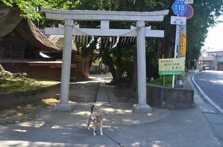 20180522高浜神社13
