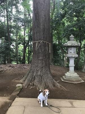 20180530皇産霊神社26