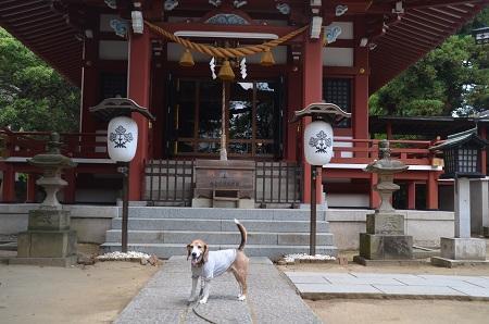 20180602諏訪神社08