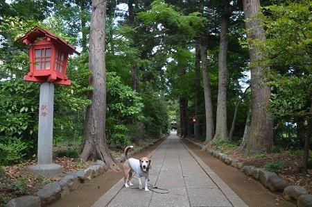 20180602広幡八幡神社05