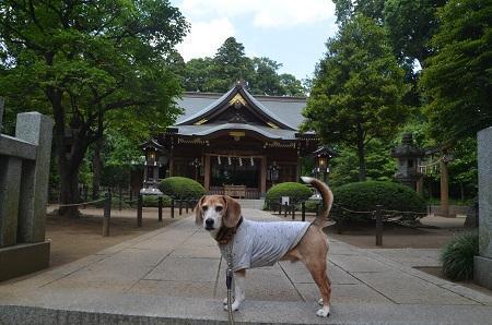 20180602広幡八幡神社11