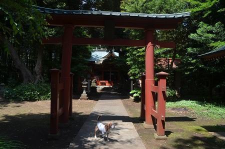 20180602大井香取神社08