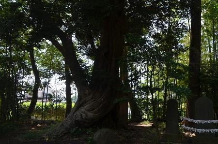 20180602大井香取神社28