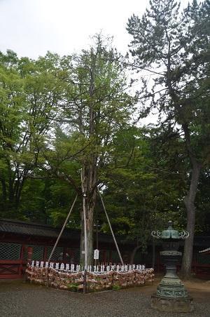 0180606根津神社29
