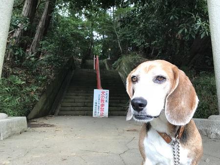20180617道野辺八幡神社04