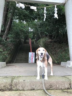 20180617道野辺八幡神社03
