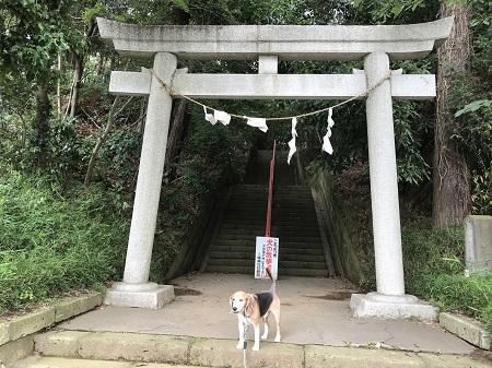 20180617道野辺八幡神社02
