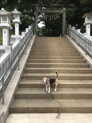 20180617八王子神社02