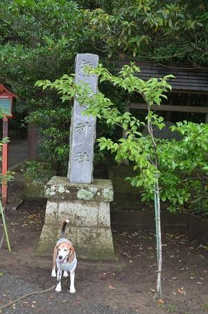 20180621熊野神社01